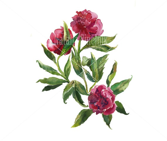 Three pink peonies digital download from original watercolor in pink and green colors, cottage chic style painting clip art