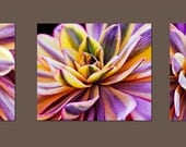 Pretty in Purple, Fine Art Photography, Set of 3 8x10 Photographs, Nature, Succulents, Purple, Yellow and Green Hues, Home Decor, Print Set