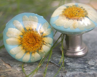 Knobs, Glass Knobs, Cabinet Knobs, Cabinet Knob, Clear resin with preserved Daisy- Flower, Garden