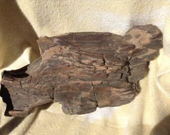 Petrified Wood Log Arizona