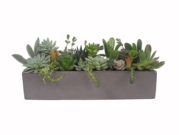 Multi tone Succulent Mix in a 13 Grey Rectangular by Window27