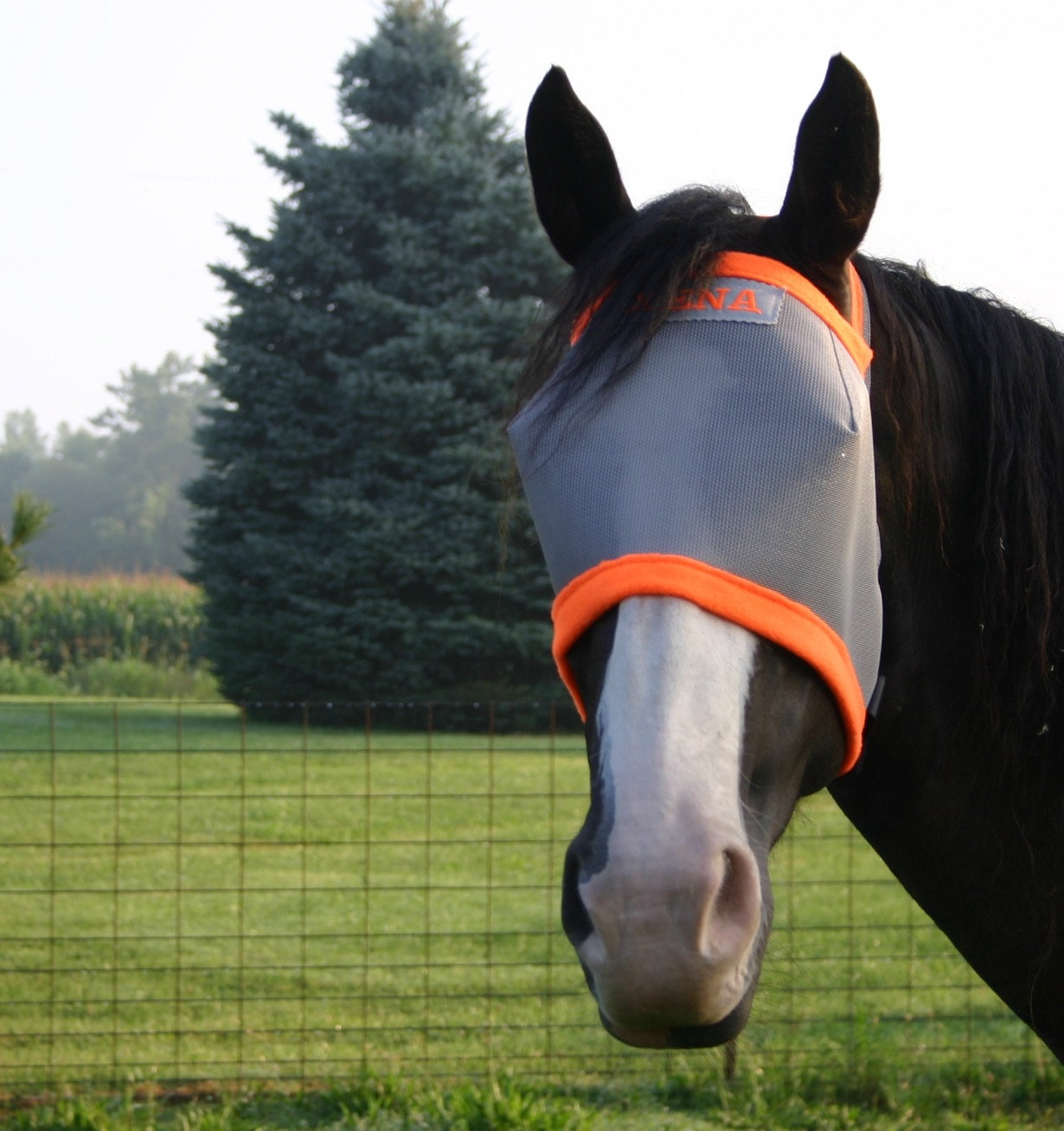 Free Crochet Horse Fly Mask Pattern : Custom Personalized Horse Fly Mask - Zeppy.io