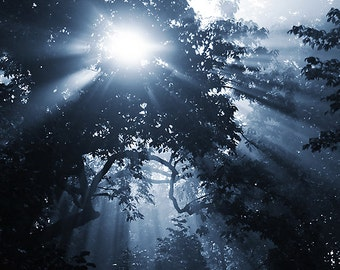 Ethereal Tree Photography, Gothic Blue Sun Rays Through Trees Photograph, Dreamy Vertical Wall Art, Fine Art Nature Photo Print