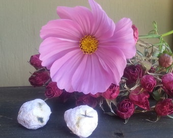 Pink Cosmos Seed Bombs, Plant Able Paper Seed Balls Garden Party Favor  Annual Flower Seed