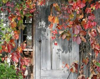 Vine Covered Door / Abandoned Farm House 5x7 / 8x10 Photograph