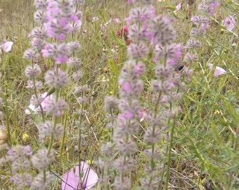 Wild flower mix, code 90, flower mix, greek field's flowers,gardening,spring flower mix