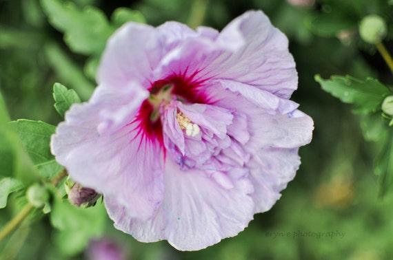 symbolism in purple hibiscus essay