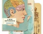 Curiosities 3 Mini Notebooks, Cavallini