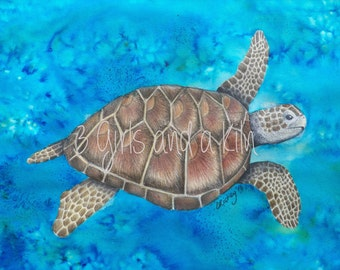Cayman Sea Turtle Drawing and Watercolor painting, 11x14 print