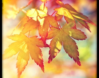 Greeting Card, Modern Vintage, Autumn Leaves, Ttv, Retro, Blank.