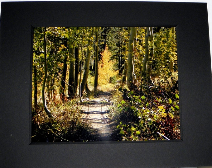 WOODLAND FOREST Wall Art featuring photography by Pam's Fab Photos focusing on a trail with a golden tree visible in the distance