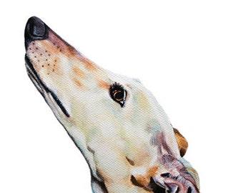 Greyhound, Galgo, Galgo Espagñol, Whippet, Iggy, sighthounds, Dog,  Art print size 8x12 inch