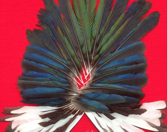 45 beautiful English Magpie Feathers