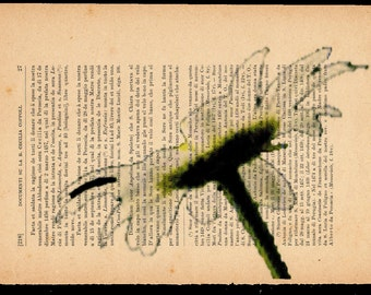 Flower prints on sheets of paper. P.27, La Margherita