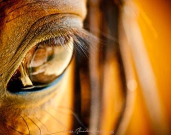 Horse eye - Photography