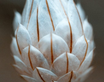 Flower dries - Photography