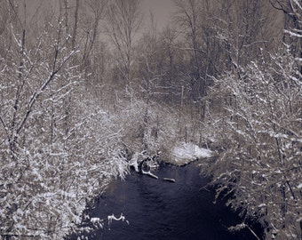 Snow art photography, Creek - White Trees, Sepia, Brown Wall decor