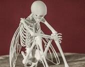 Fairy Skeleton 3D Print Taxidermy