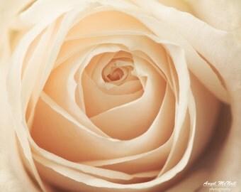 Fine Art Photography print, flower photography, rose, close up, cream colored, macro, elegant decor, large wall art