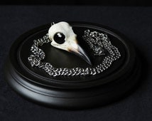 Beautiful Real carrion crow skull pendant necklace with raven black glass eyes stainless steel chain goth pagan avant garde Curo