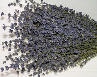 Lavender - 6 bunches of Dried English Lavender