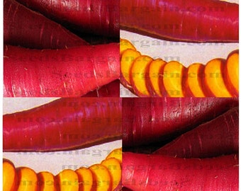 COSMIC PURPLE Carrot seeds - Beautiful carrot with a very sweet flavor - YELLOW Flesh