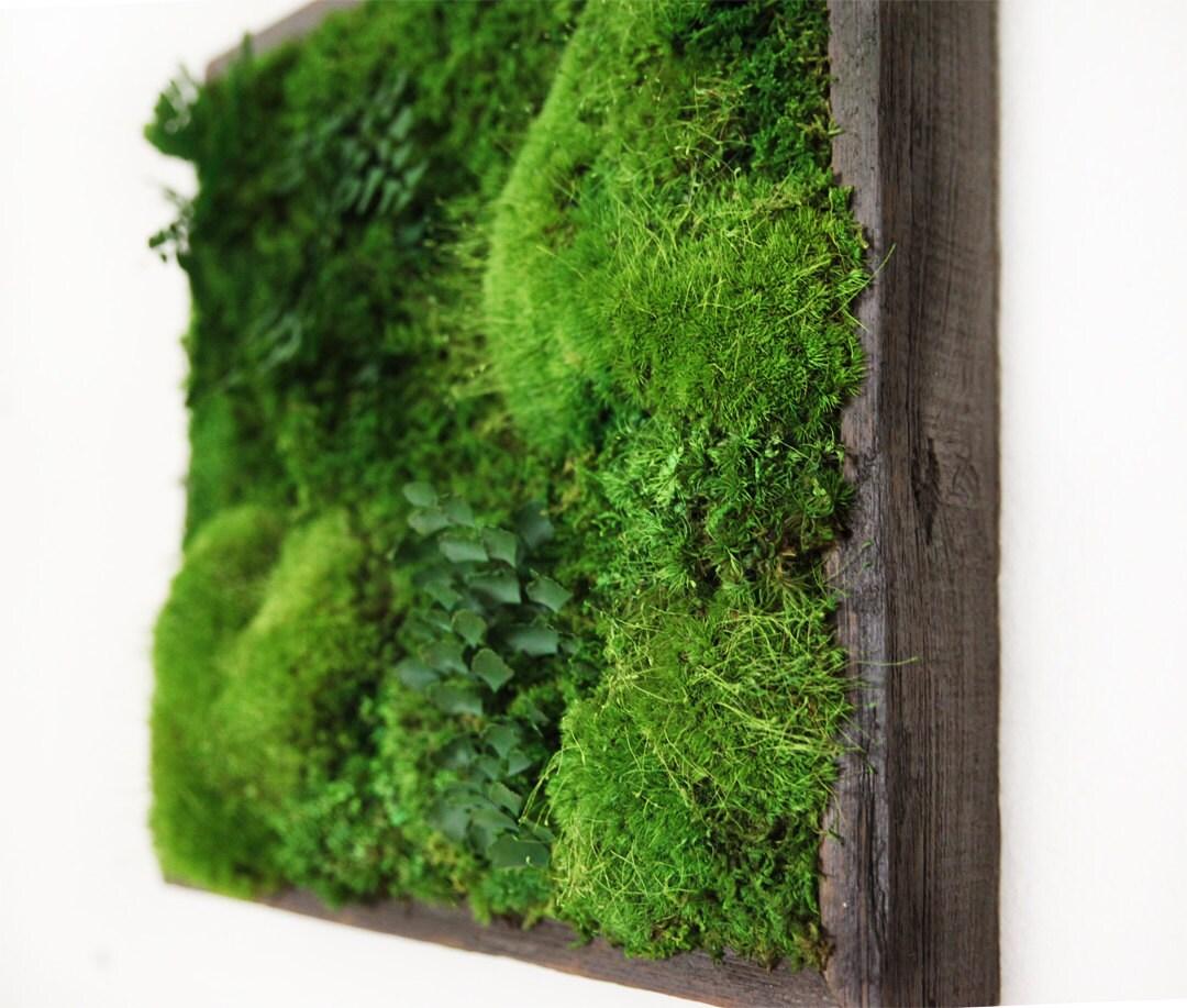 14x14 artisan moss plant painting no maintenance green for Green wall art