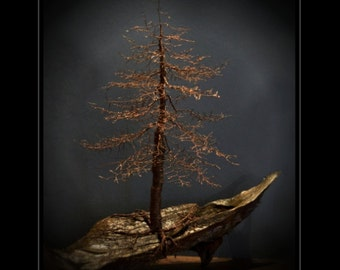 Samples of Custom made,Hand twisted wire, Bonsai, Tree of Life, sculpture.Natural patina, copper wire mounted on beautiful drift wood.