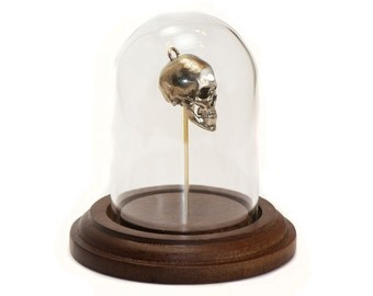 Science Gifts 3D Printed Human Skull from CT Scans Anatomy Science Art Biology Gift