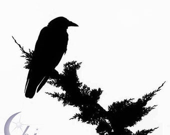 Nature Photography. Crow Bird Photography.  Black and White Photography. 8x8 Print