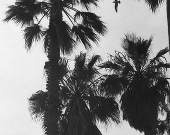 California Dreaming - Photographic print - wall art - black white - vintage -Home Decor