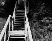 Black and white country art photography: wood staircase in foliage. Rustic decor, beach art, cottage chic. Ready-to-frame.