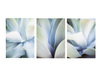 Agave Prints - Set of 3 - Gallery Wall, Abstract Wall Art, Fine Art Photography, Blue & Green Wall Art, Boho Prints, Nature Photography