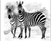 Grant's Zebras Print of Pen and Ink drawing, Signed and Numbered