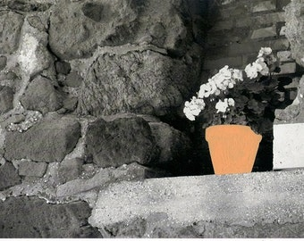 hand colored photograph of a flower pot, black and white photo art, salmon