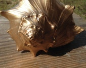 Large Beautiful Gold Conch Shell