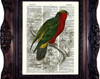 Parrot Dictionary art print. Vintage Art Print. Print on Book Page. Parrot from Natural History. 19. century. Dictionary print. Code:382