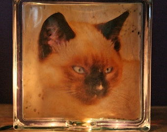Glass Photo Light Box:  Feral Siamese Mix  Kitten