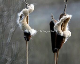catt tails reeds