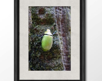 Beetle in the Monteverde Cloud Forest Reserve Print