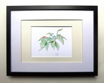 Chilli (fine art print of a chilli plant).