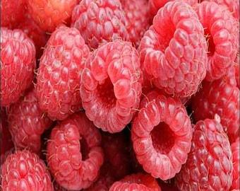 Raspberry Red Bush Seeds (Rubus idaeus) 25+ Seeds