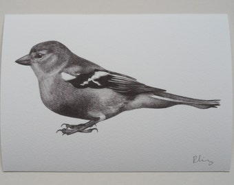 Chaffinch Illustration Giclee Print, A5