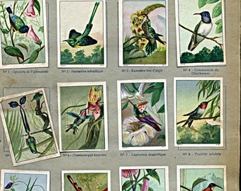 """Page of Bird Stickers from French Children's Book 1930s Stamps Labels """"The Wonders of the World"""" Anthophilious s1"""