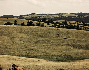 Landscape Photography Fine Art Photography Home Decor Horse Photo Rolling Hills Green Brown Archival Print