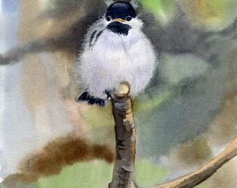 Bird art Chickadee Baby sitting in a tree