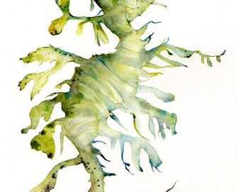 Leafy Sea Dragon Archival print of watercolor