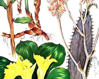 Aloe Plant - Botanical Print - 1988 Vintage Flower Print