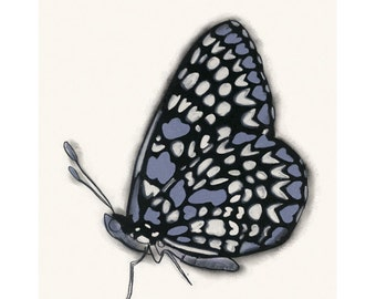 "Butterfly art print - Butterfly Wall Art - Butterfly Artwork : Blue Butterfly 4"" X 6"" print"
