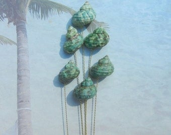 Seashell Stems - 6 Naturally Colorful Jade Turbo Seashells for Bridal Bouquets or Centerpieces